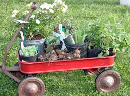 Plants in a Red Wagon